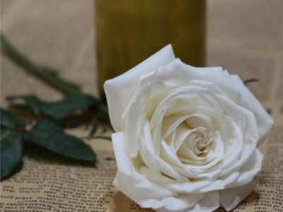 白色玫瑰代表什么 送白玫瑰代表什么意思