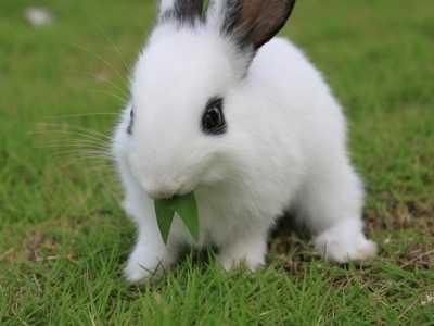 兔人2020年运势运程 属兔的人2020年全年运势