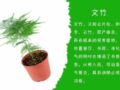 老板桌上放什么植物好 老板办公室摆放什么植物比较好